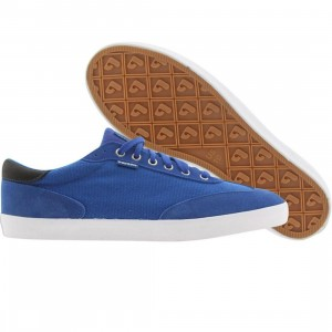 Pointer Fairbank (electric blue)